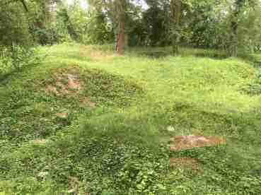 L'arboretum de Craonne : les trous des obus sont encore visible